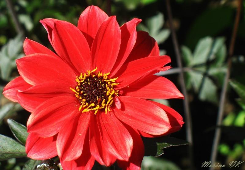 Just a flower