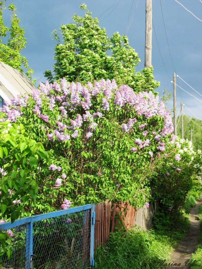 at my dad's dacha - Novosibirsk, Russia