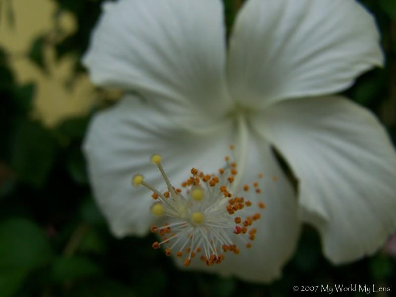 Pollen and Stigma