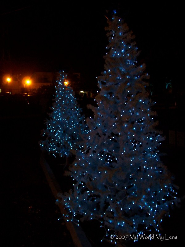 Blue and White Trees
