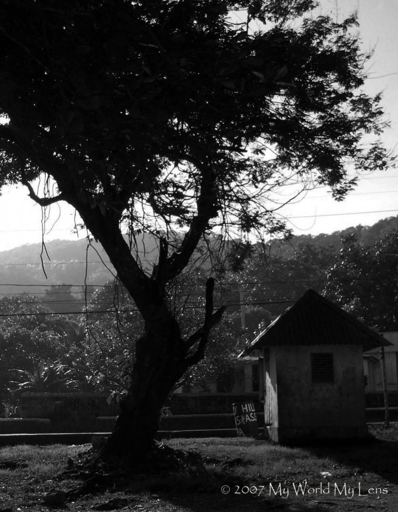 Unda Di Tree