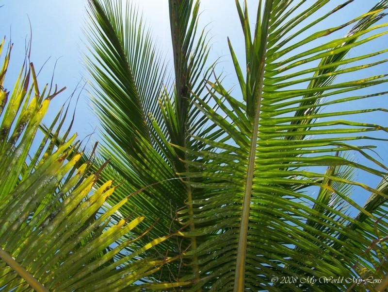 On Vacation - Unda Di Tree