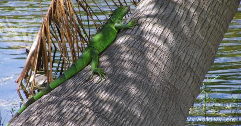 Florida Wildlife: Reptile