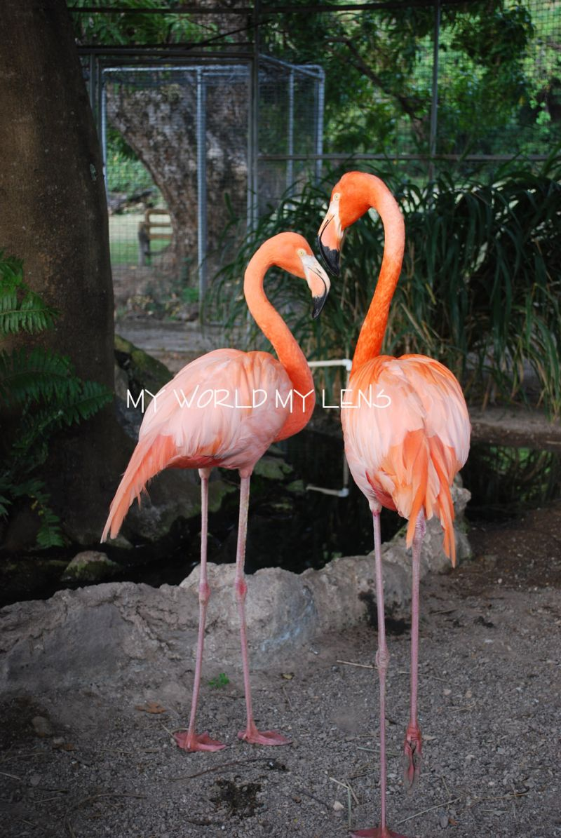 Hope Zoo: Flamingos