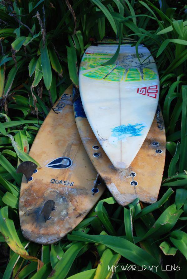 Grass Surfing?