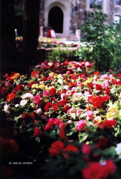 The Flower Carpet