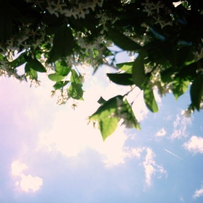 Blue Sky and Flower