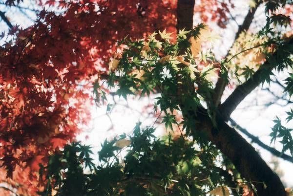 Leaf leaf leaf
