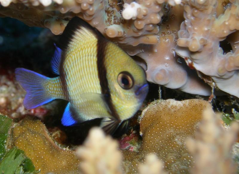 Teeny tiny fish