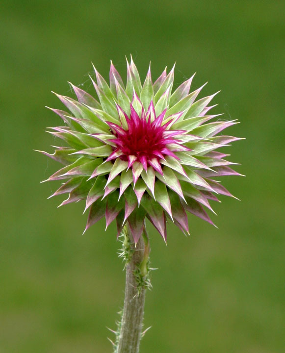 Every thistle has a thorn