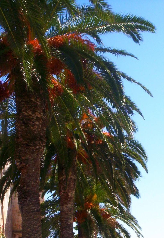 palms korcula