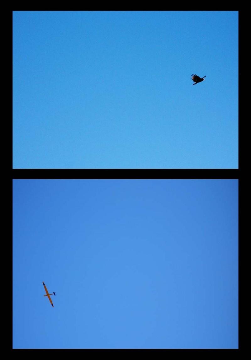 It's a bird, it's a plane ...