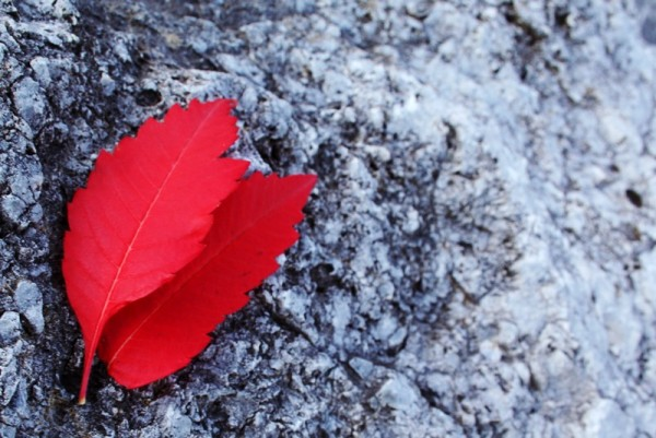 two red leafs