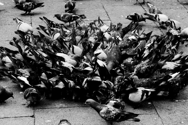 birds in italy