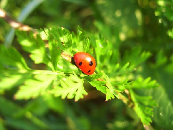 Nature's little creature