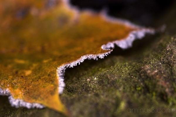 Ice Leaf