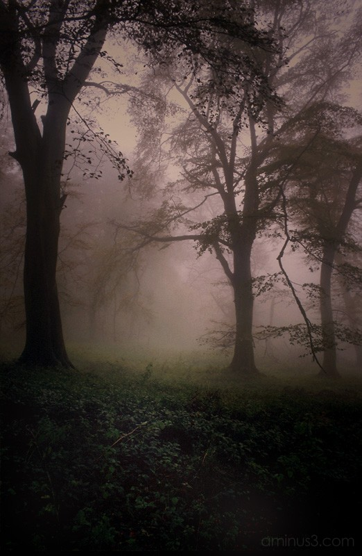 Misty Morning Woodland