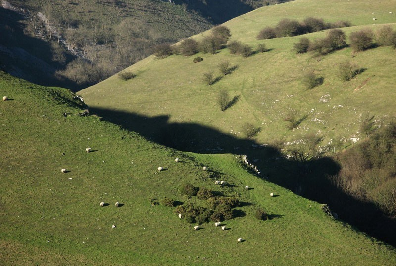 Hills and flocks of sheep
