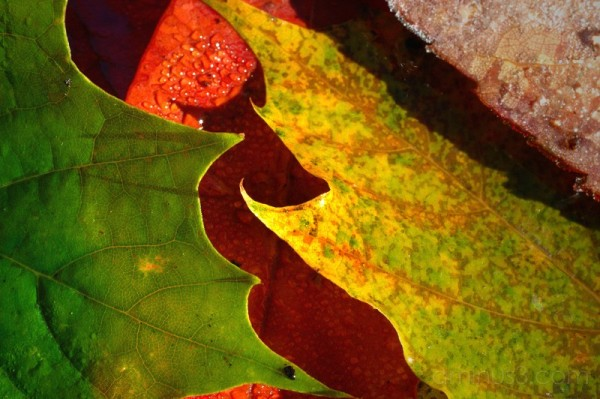 leafy nest