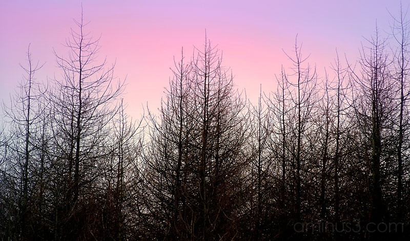 Pink winter sky