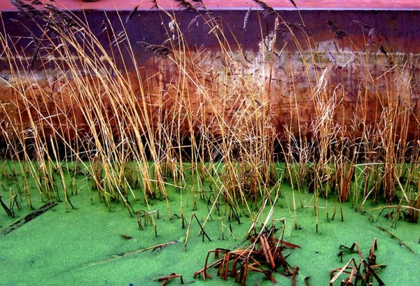 Rust and Reeds