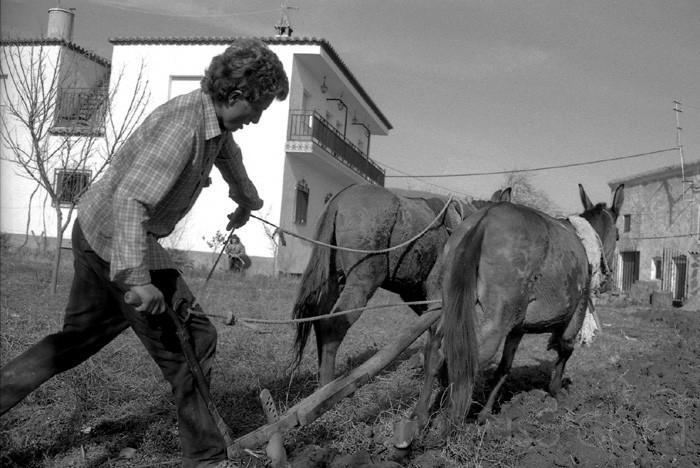 Juan, Ploughing