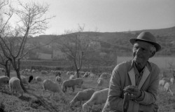 Shepherd in Yegen