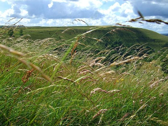 Blowing grass at Monsal Head