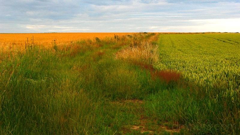 Colourful field edge