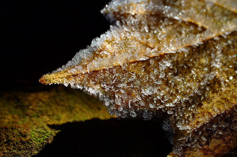 icy leaf in autumn
