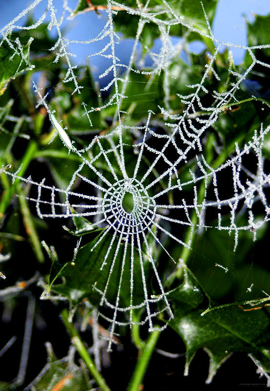 web and icy