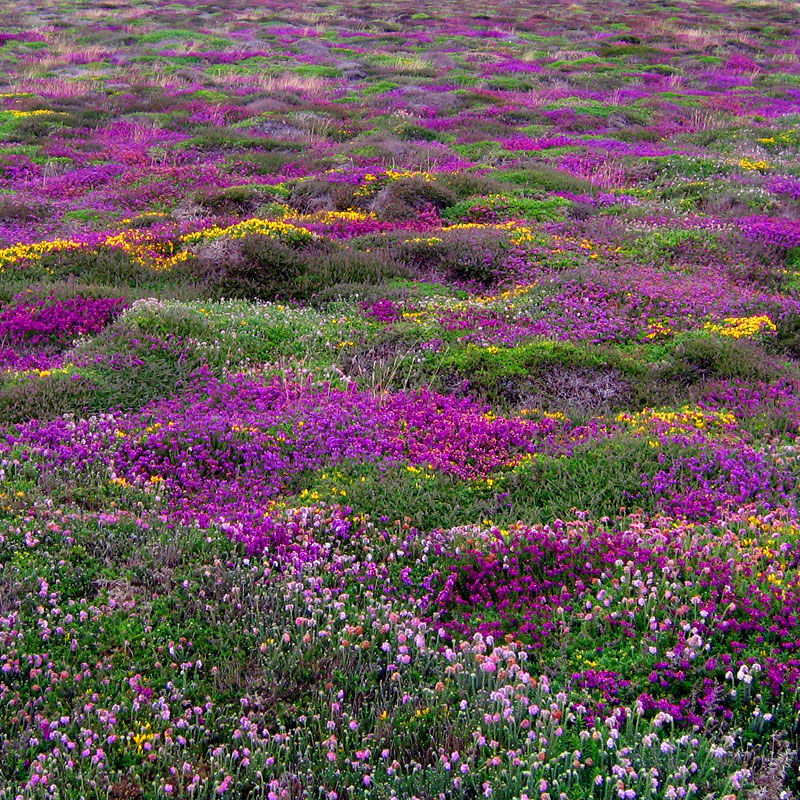Aminus3 Color Featured photo Patchwork Heath | 2 July 2009