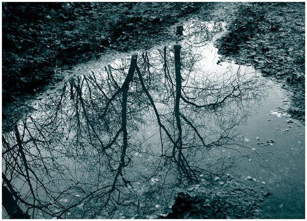Muddy Puddle Reveals A Hidden World