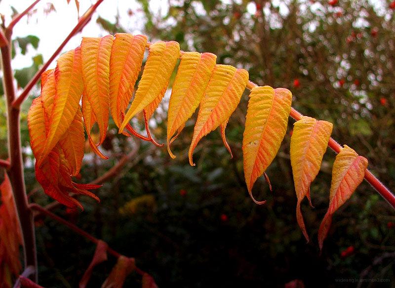 Leafy autumn