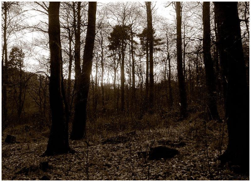 december woodland