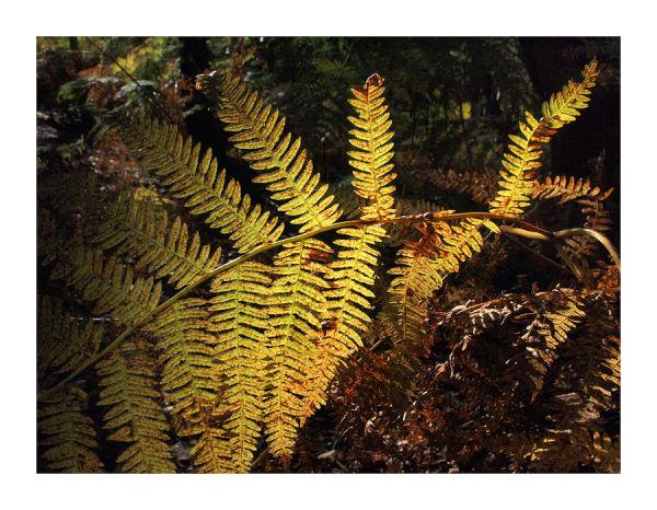 backlit fern