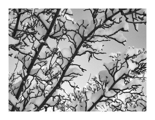 Snow Veins