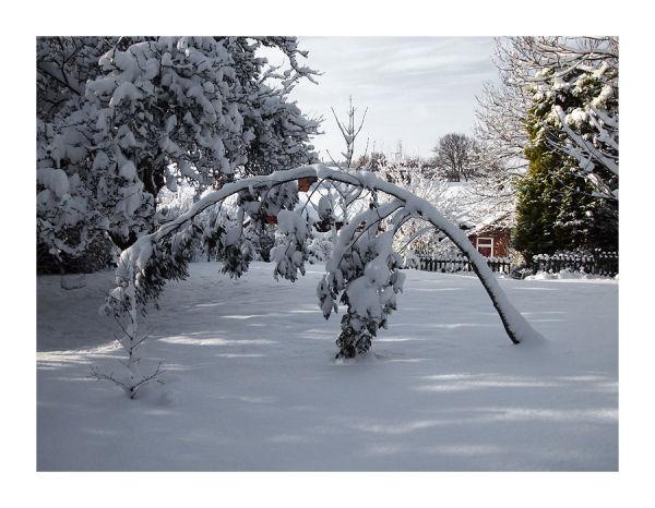 Bendy Tree