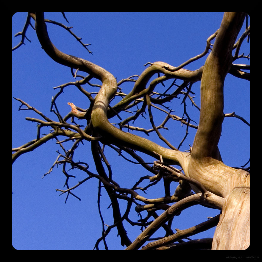 bones of a tree in the blue