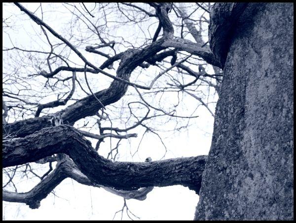 horizontal tree, vertical rock