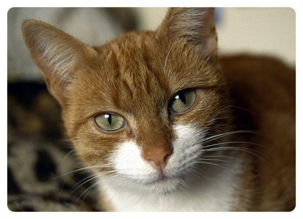 Ruth's Cat