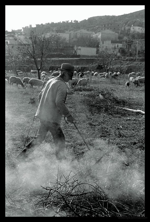 man tending sheep, spain