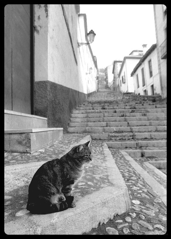 cat on hill spain