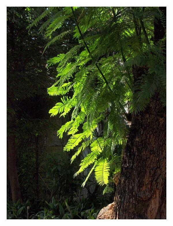 sunlit leaves seville