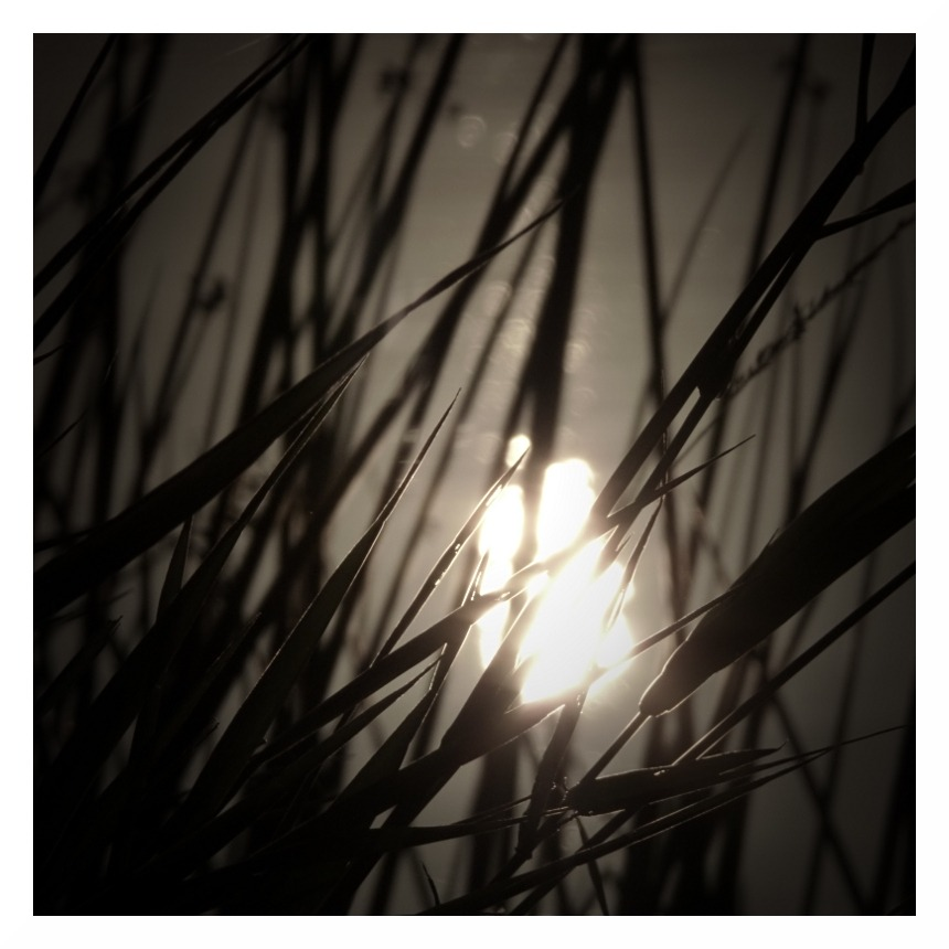 sunset river trent reeds