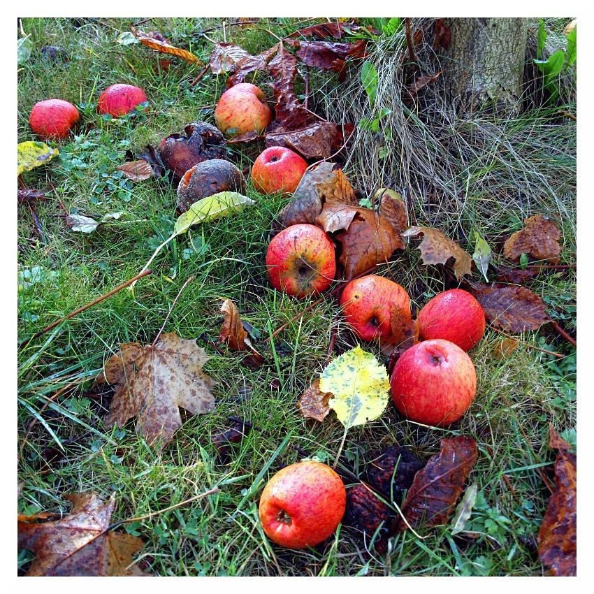 garden apples end season