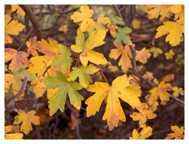 hawthorn autumn november shining hedgerow