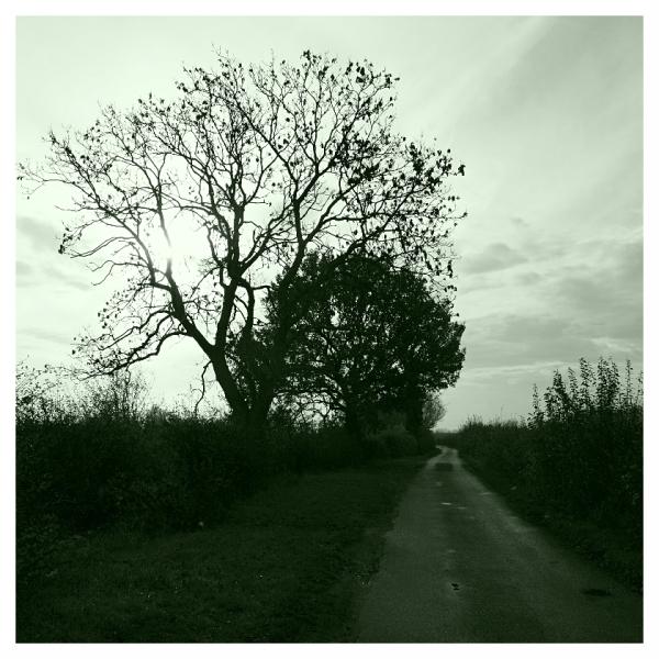 Dark Road to Nowhere