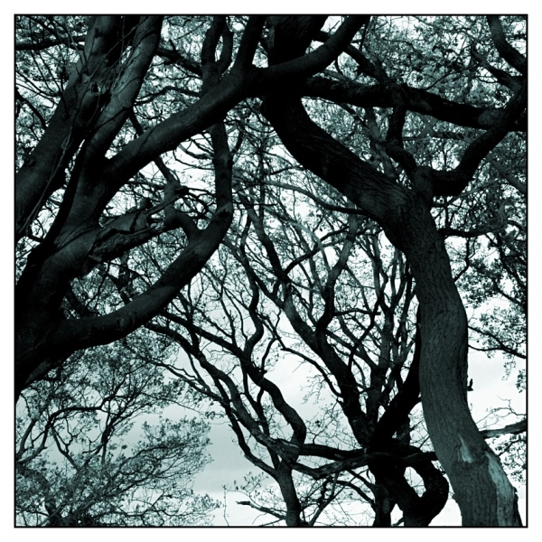 Tangle of Winter Trees