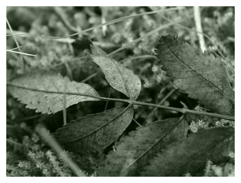 leaf litter study before everything moulds away